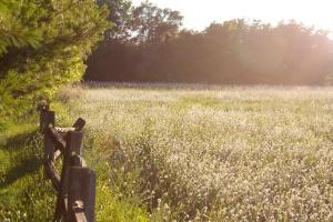 michigan field
